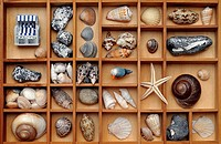 Shells, stones and beach decoration in a type case