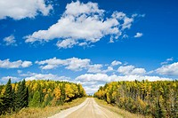 Road through boreal forest, Duck Mountain Provincial Park, Manitoba, Canada