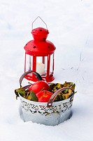 Bucket of apples and red lantern on snow. Winter garden decor