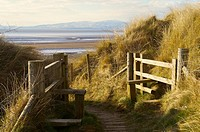 Foot path styles through Marram Grass covered sand dunes Solway Coast. Solway Cumbria England UK.