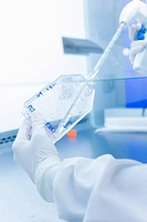 Cancer research laboratory, hands of scientist preparing cells using electronic pipette