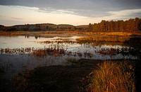 morning at a lake, Canada, Ontario, Algonquin - Algonquin, Ontario, Canada, 01/01/2014