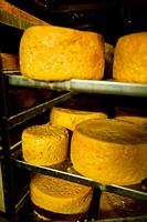 Making artisan cheese Cabrales (Poo de Cabrales, Asturias, Spain, Europe).