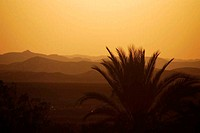 sunset with palm trees and desert