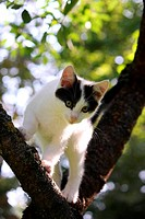 Cute three colored kitten climbing on the tree