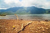 Twigs the lake Rub on the Island of Bali