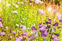 summer landscape. wildflowers