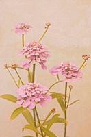 Vintage background with garden flowers