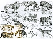 Carnivorous Animals (litho) (b/w photo), English School / Private Collection / Bridgeman Images