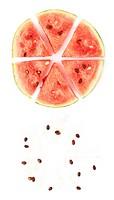 Watermelon circle cut in fragments