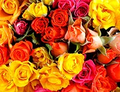 different color roses