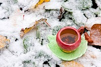 A cup of tea on a background of snow-covered leaves