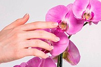 French manicure and orchid flower