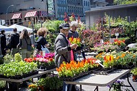 Shoppers buy plants at the Union Square Greenmarket in New York on Saturday, May 23, 2015.