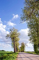 spring road with tree perspective