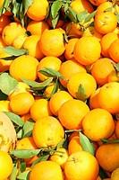 Fresh market produce of oranges
