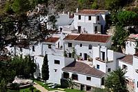 Acebuchal, near Frigiliana, Province Malaga, Andalusia, Spain