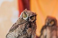 Owl, medieval market, Burjassot, Valencia province, Comunidad Valenciana, Spain