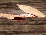 Leaf Reflection on Wood