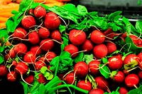 bunch of resh radishes