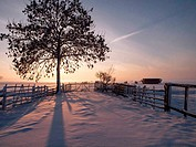 Pasture in winter sunset