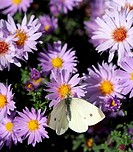 butterfly on colorful spring flower nature background