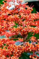 beautiful exotic tropical fower plant outside in summer