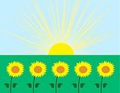 Sunflowers with sunburst background