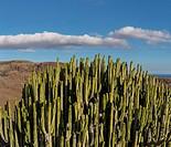 Spain, Europe, Maspalomas, Gran Canaria, Canary Islands, Cactus, Barranco Hondo, landscape, summer, mountains, hills,