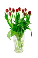 Glass vase with red tulips