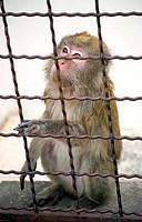 sad Monkey Zoo