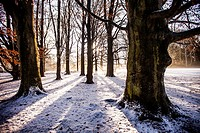 Romantic snow landscape in the Netherlands, Europe.