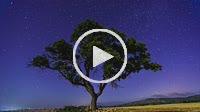 Tree and starry sky. Almansa. Albacete province. Spain