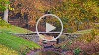 Promenade over a bridge in autumncolored forest
