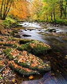 Autumn colours surround the River Barle near Tarr Steps. Exmoor National Park, Somerset, England.