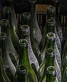 Unused wine bottles c=gathering dust in the cellar of a wine estate. Western Cape Province, South Africa
