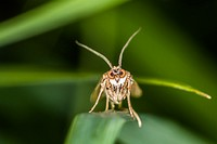 Germany, Saarland, Niederbexbach, A rush veneer with great eyes is sitting on a grass-stock