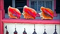 Big colorful seashells