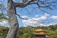 Kinkakuji Temple, The Golde Pavilion, Rokuon-ji temple, Kyoto, Japn