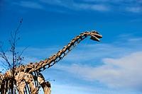 Dinosaur Skeleton, Bilbao, Biscay, Basque Country, Euskadi, Euskal Herria, Spain, Europe.