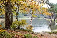 Autumn forest in Bassa de Oles lake near to Gausac, Valle de Aran valley in Lleida, Catalonia, Spain.