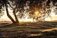 Picture of beautiful orange sunset in olive trees garden near Jaen, Spain.