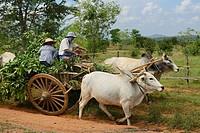 Myanmar, Mandalay region, The road to Mount Popa.