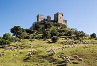 The impressive eighth-century castle of Almodovar del Rio perches high above the Guadalquivir river valley. In the foreground a flock of sheep. Cordob...