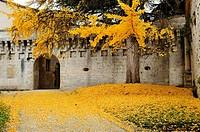 entrance to Chateau Bourdeilles in autumn, Bourdeilles, Dordogne Department, Aquitaine, France.