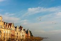 Whooper swan,(Cygnus cygnus) in flight over Lake Constance,Bodensee,Germany.