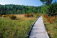 Flag Glade, Highlands Scenic Highway, Cranberry Glades Botanical Area, Monongahela National Forest, West Virginia.