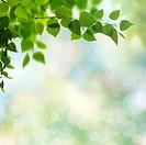 Summer garden, beauty seasonal backgrounds with beech tree and shiny bokeh.