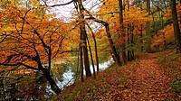 A leaf-strewn path follows a stream in a colorful autumn scene, Pennsylvania, USA.