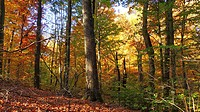 Color and silence reign deep in the autumn woods, Pennsylvania, USA.